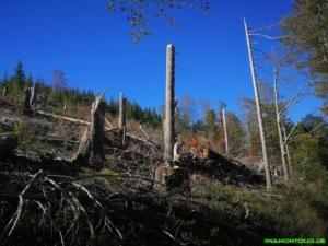 Waldsterben auf dem Lehrpfad