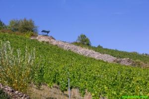 Steinriegel: Weinweg bei Haagen