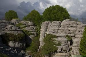 der steinerne Wald