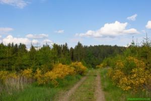 Spaziergang um den Fuchsweiher