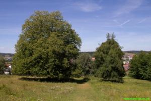 Naturreservat Beutenlay: Wacholderheide