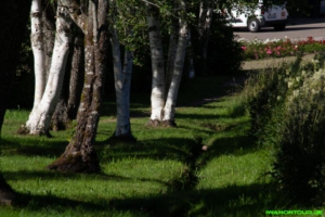 Im Park von Nöggenschwiel
