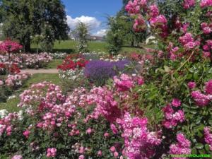 Der Duftgarten