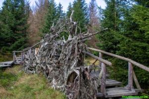 Der Wald Wandel Weg